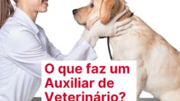 O que faz um Auxiliar de Veterinário?